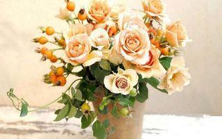 Фото бесплатно горшок, розы, лепестки