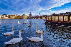 Фото бесплатно Прага, Чехия, Лебеди
