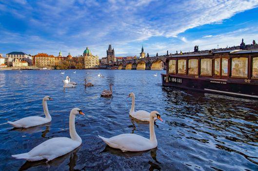 Бесплатные фото Prague,Прага,Чехия,лебеди