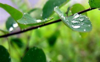 Бесплатные фото дерево,ветка,листья,зеленые,капли,вода