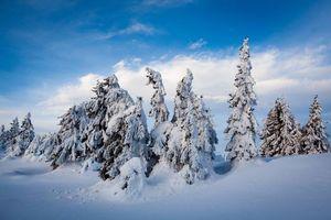 Фото бесплатно елки, снегопад, сугробы