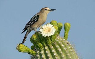 Бесплатные фото кактус,цветок,птичка,перья,крылья,хвост,клюв