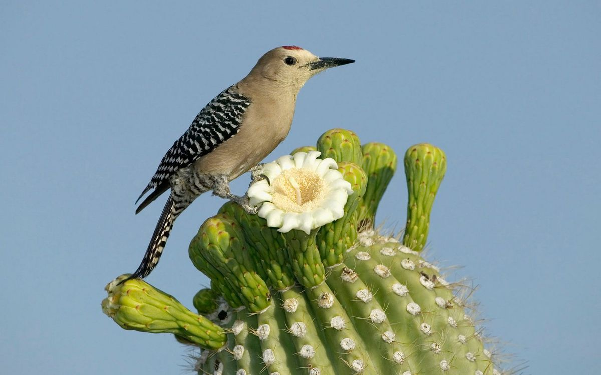 Photos for free cactus, flower, bird - to the desktop