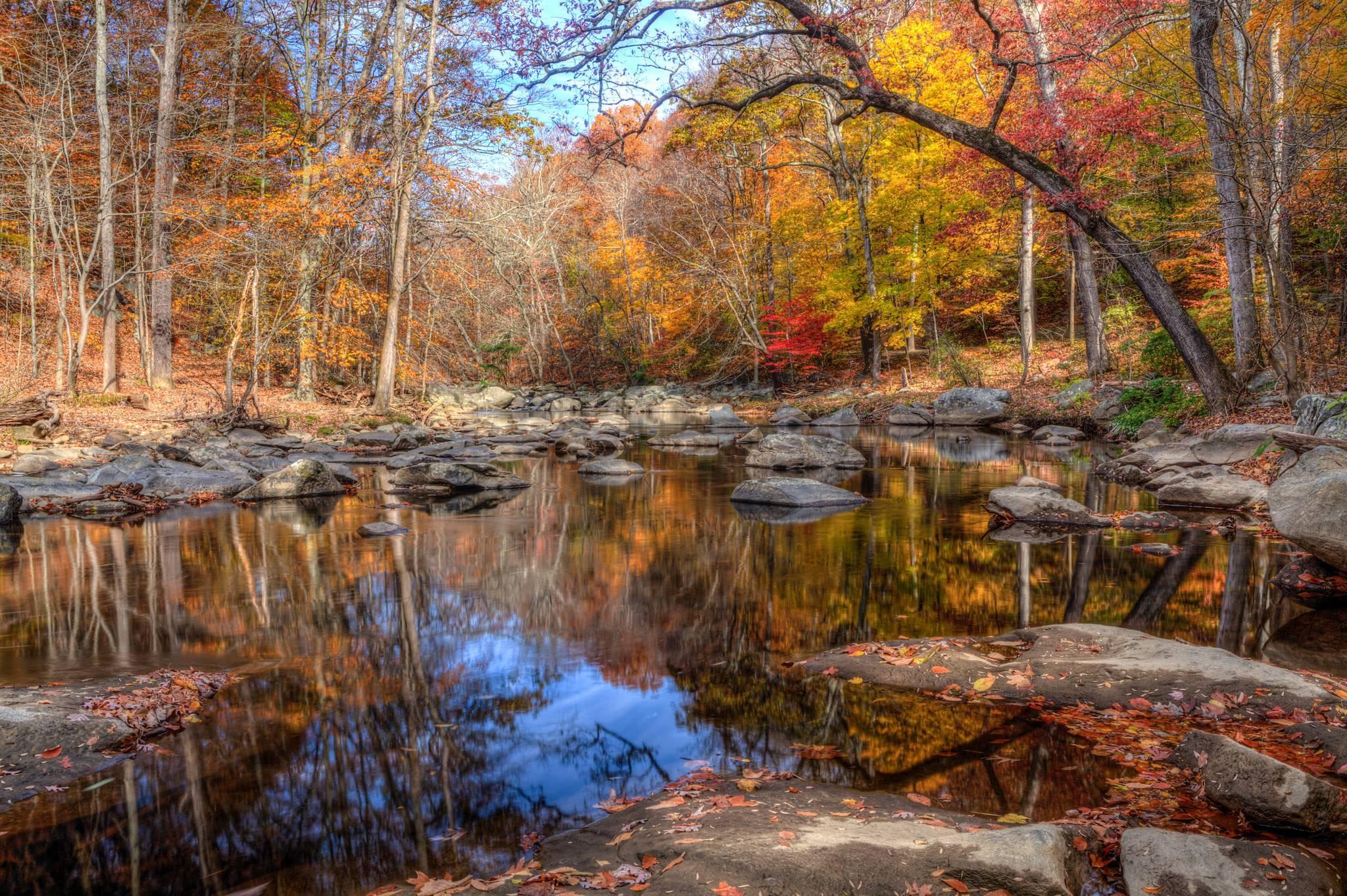 осень, лес, водоём