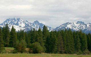 Бесплатные фото трава,лес,деревья,горы,скалы,снег,облака