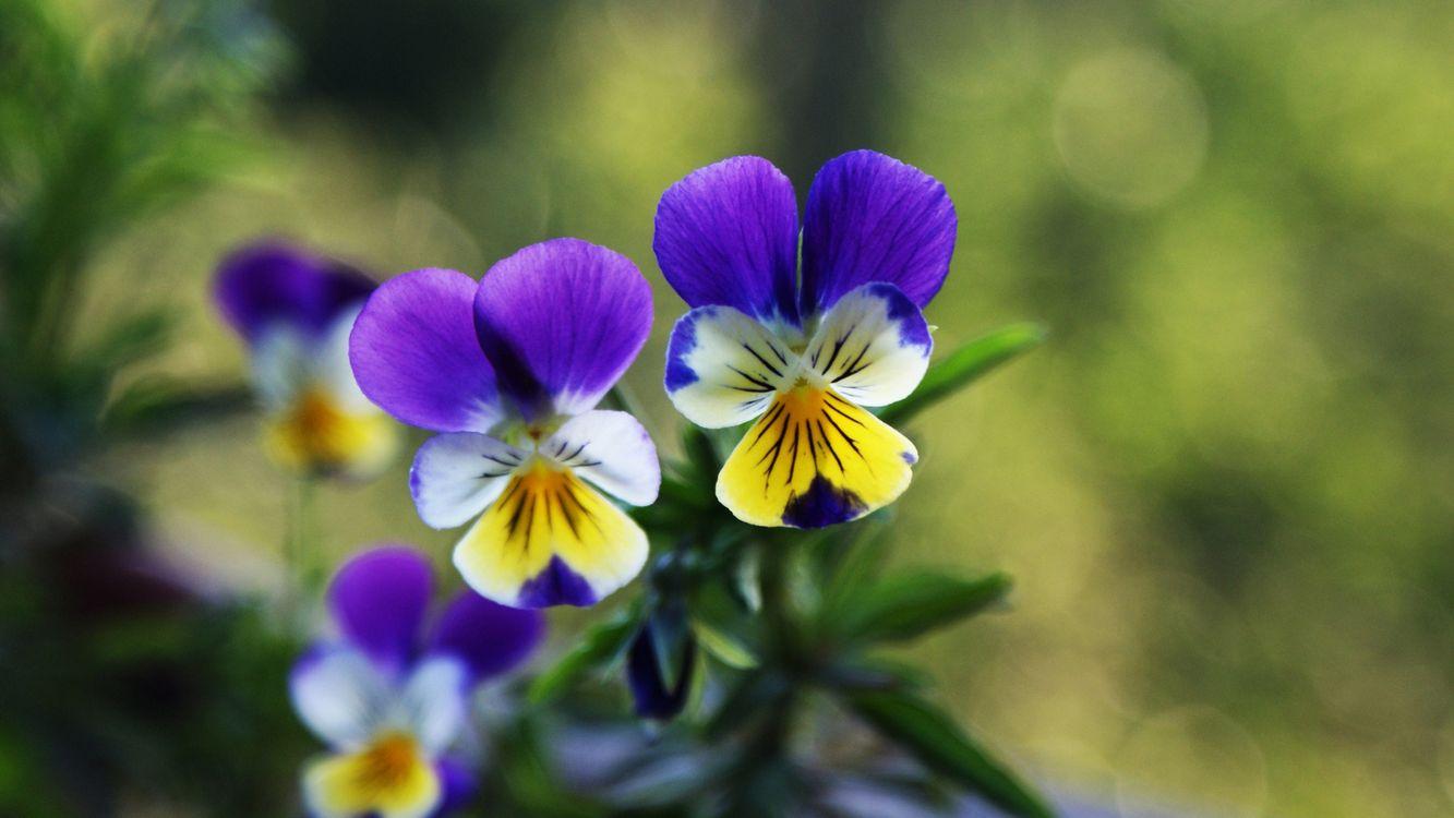 Фото бесплатно цветочки, лепестки, цветные, листья, зеленые, цветы