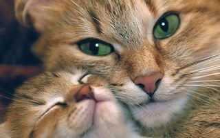 Бесплатные фото кошка,котенок,глаза,зеленые,шерсть,объятья