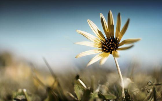 Фото бесплатно Тяжелая, жизнь, цветка