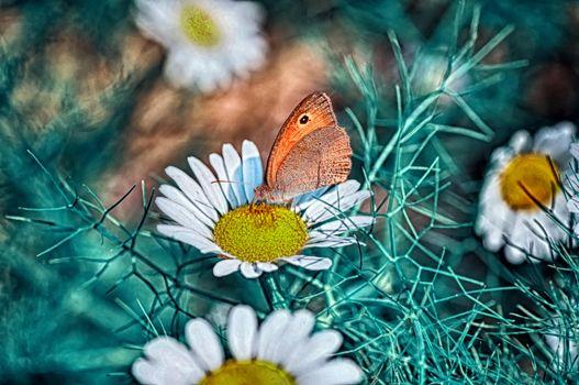 Бесплатно бабочка, цветок - фото новые