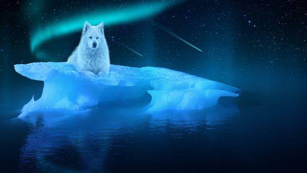 Фото бесплатно ночь, льдина, белый волк