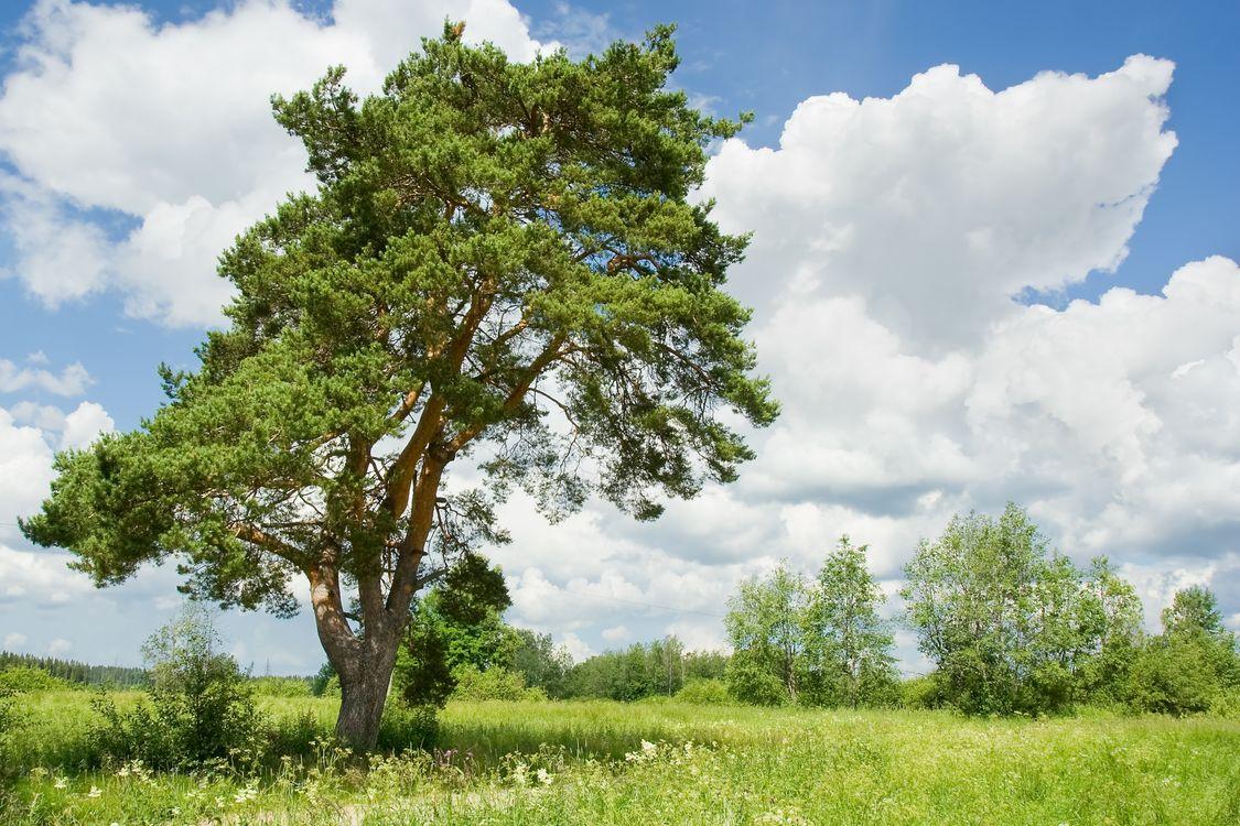 Фото бесплатно поле, деревья, небо - на рабочий стол