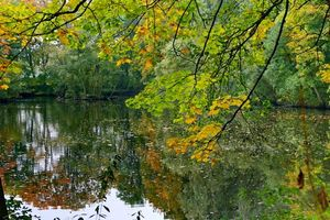Photo free pond, autumn, forest