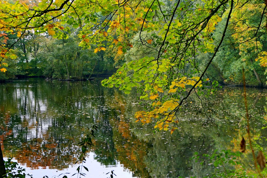 Free photo pond, autumn, forest - to desktop