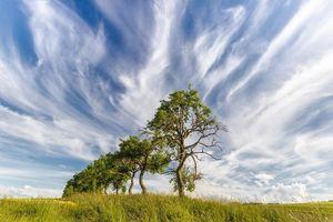 Бесплатные фото поле, деревья, цветы, пейзаж