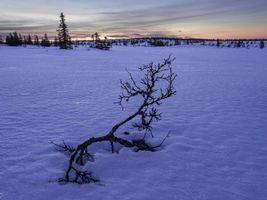 Заставки зима,снег,сугробы,деревья,пейзаж