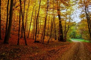 Бесплатные фото осень, лес, деревья, дорога, пейзаж