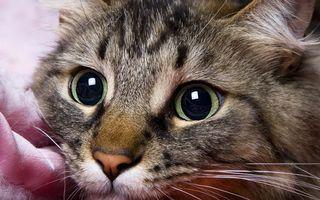 Бесплатные фото кот,морда,глаза,усы,уши,шерсть