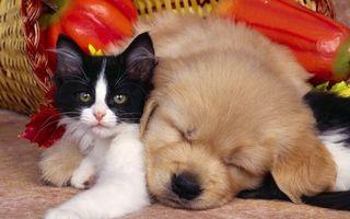 Фото бесплатно котенок, щенок, морды