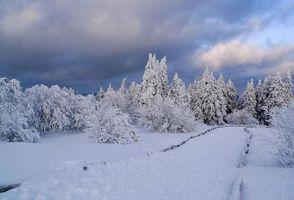 Бесплатные фото зима, снег, деревья, дорога, пейзаж