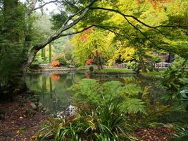 Бесплатные фото Melbourne,парк,пруд,деревья,осень,пейзаж