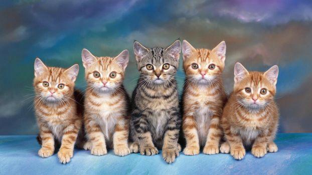 Заставки кошки, коты, котята