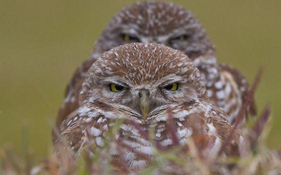 Photo free owls, eyes, beaks