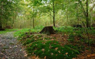 Бесплатные фото лес,деревья,кустарник,тропинка,пенек,мох,трава