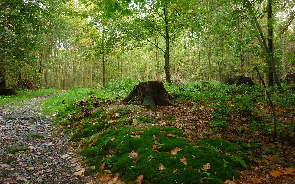 Фото бесплатно путь, деревья, мох - на рабочий стол