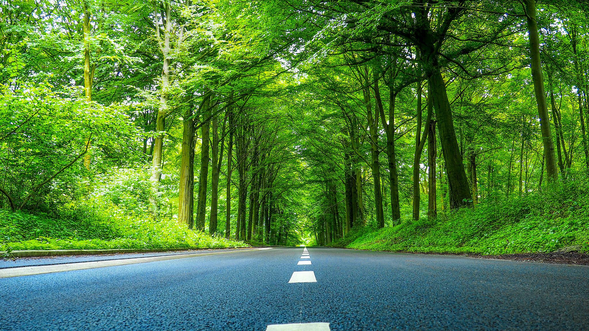 Дорога и лес без смс