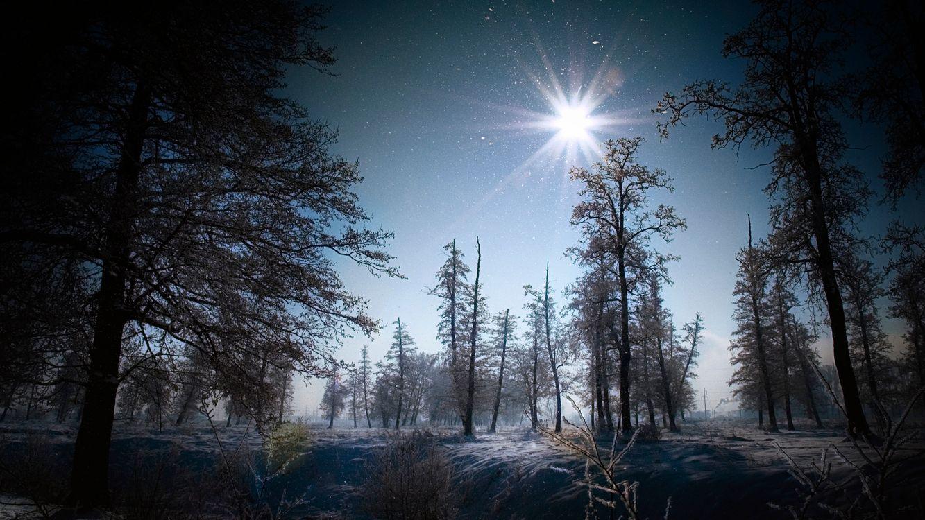 Фото бесплатно зима, деревья, трава, иней, снег, небо, солнце, природа