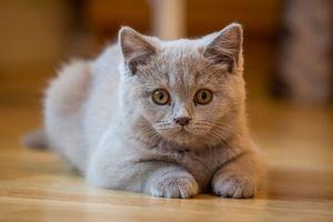 Бесплатные фото кот, кошка, котёнок, животное, взгляд