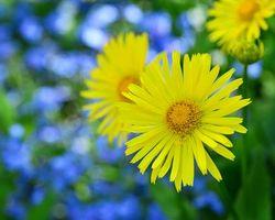 Photo free Yellow flowers, flora, macro