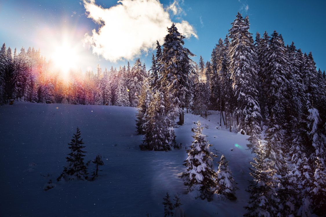 Красивейшие картинки зимы на рабочий стол