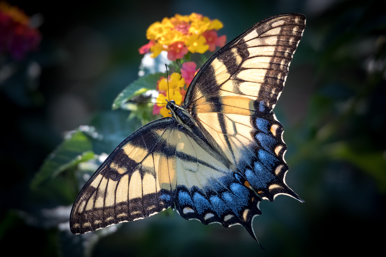 Рождения, бабочки фото красивые картинки