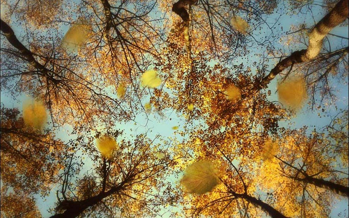 Фото бесплатно осень, деревья, ветви - на рабочий стол