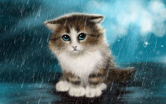 Бесплатные фото котёнок,под дождём,art