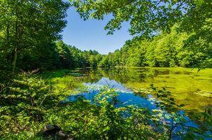 Бесплатные фото озеро, деревья, лес, водоём, природа