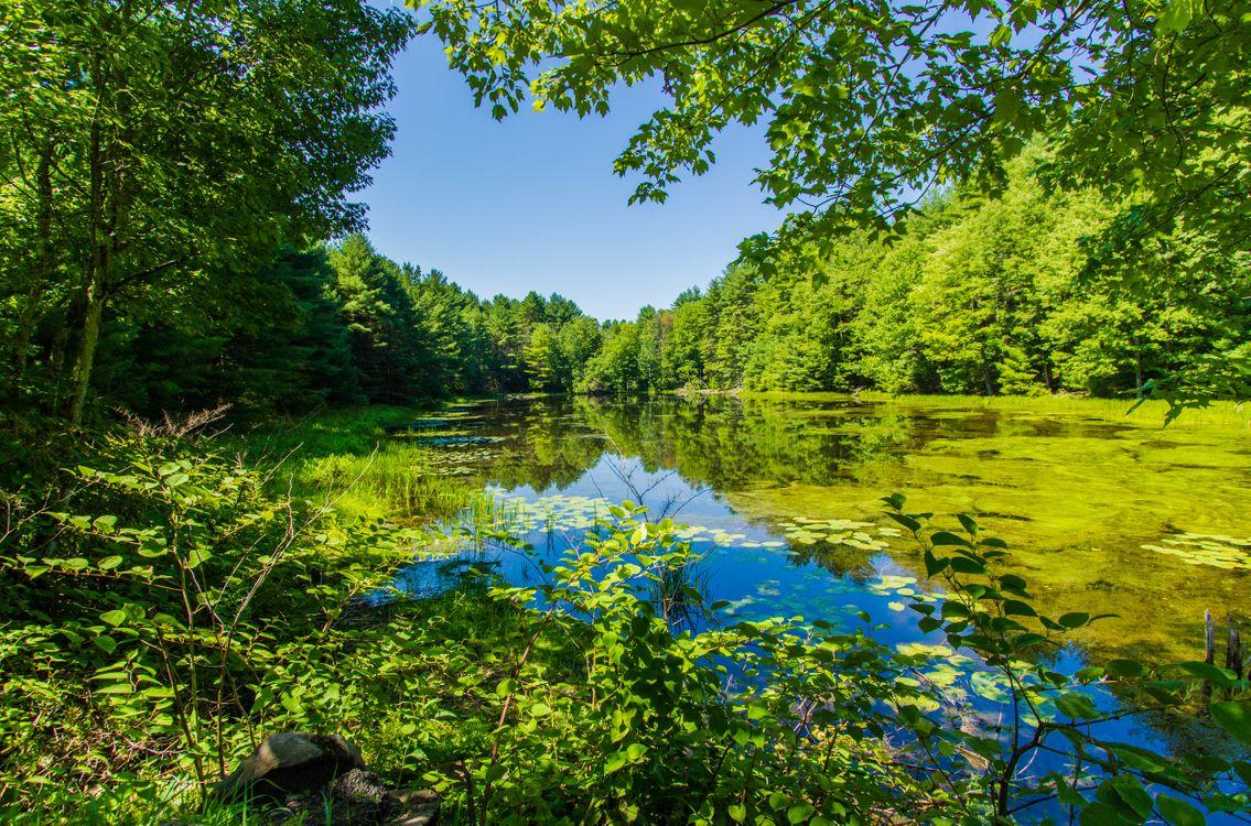 Free photo lake, trees, forest - to desktop