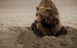 Бесплатные фото медведь,бурый,морда,лапы,шерсть,мокрая,песок