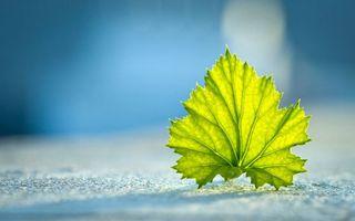 Бесплатные фото поверхность,лист,зеленый,прожилки,фон,мутный