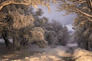 Бесплатные фото лесная дорога,после снегопада,снег,сугробы,деревья,ветви,зима