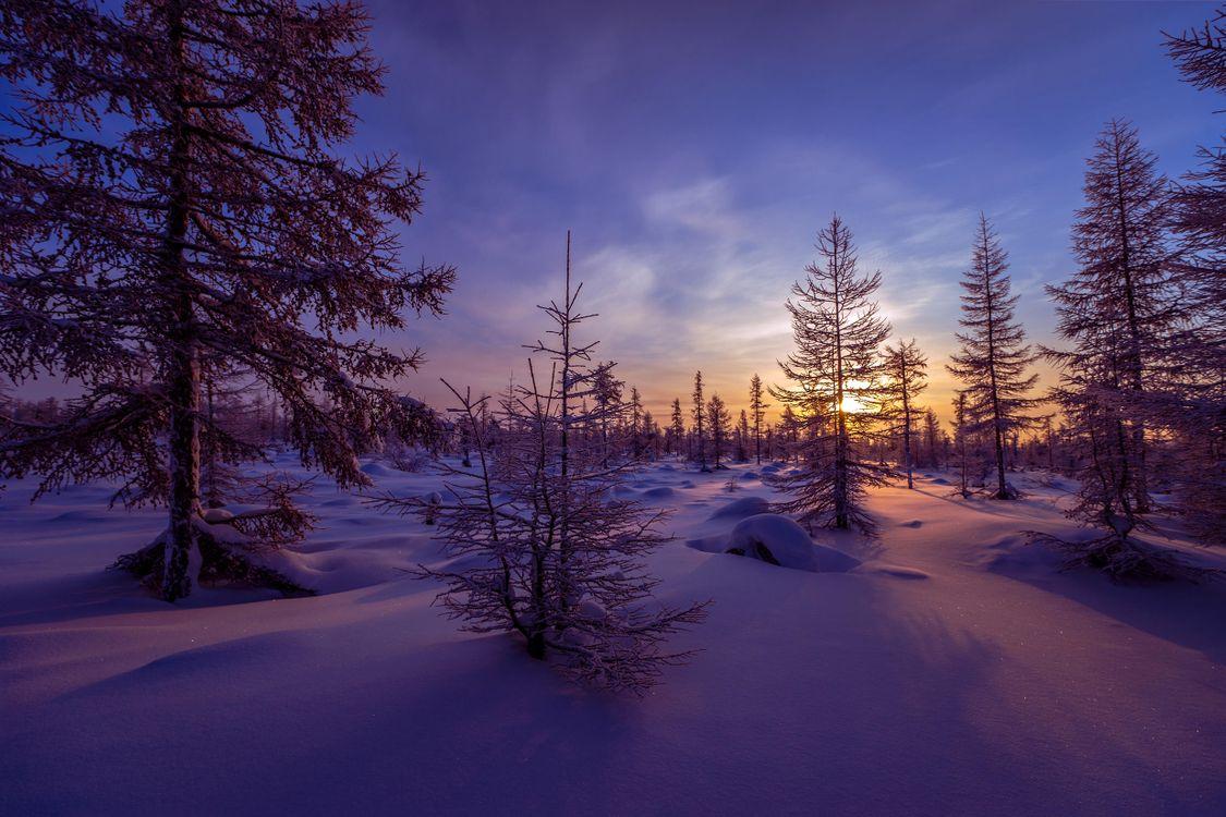 Фото бесплатно закат, зима, снег, сугробы, деревья, пейзаж, пейзажи