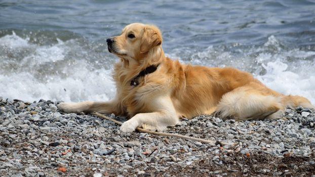 Photo free dog, fur, collar