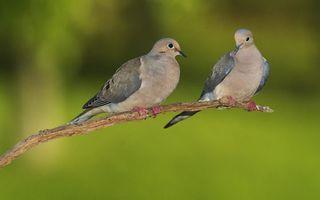Фото бесплатно птицы, лапы, хвосты