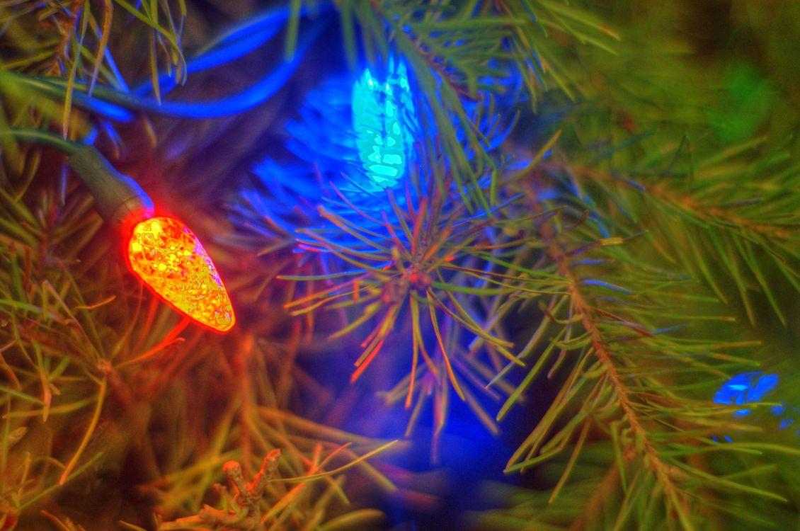 Фото бесплатно гирлянды, шишки, ветви елки, новый год
