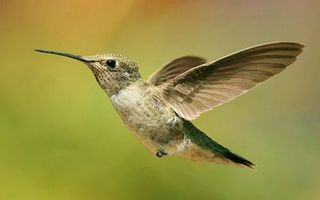 Photo free hummingbird, flight, beak