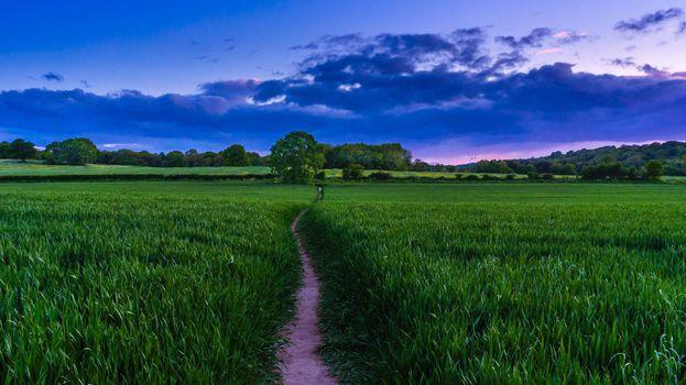 Фото бесплатно поле, тропинка, деревья