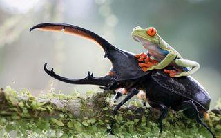 Бесплатные фото жук,черный,рога,лапки,лягушка,верхом,глаза оранжевые