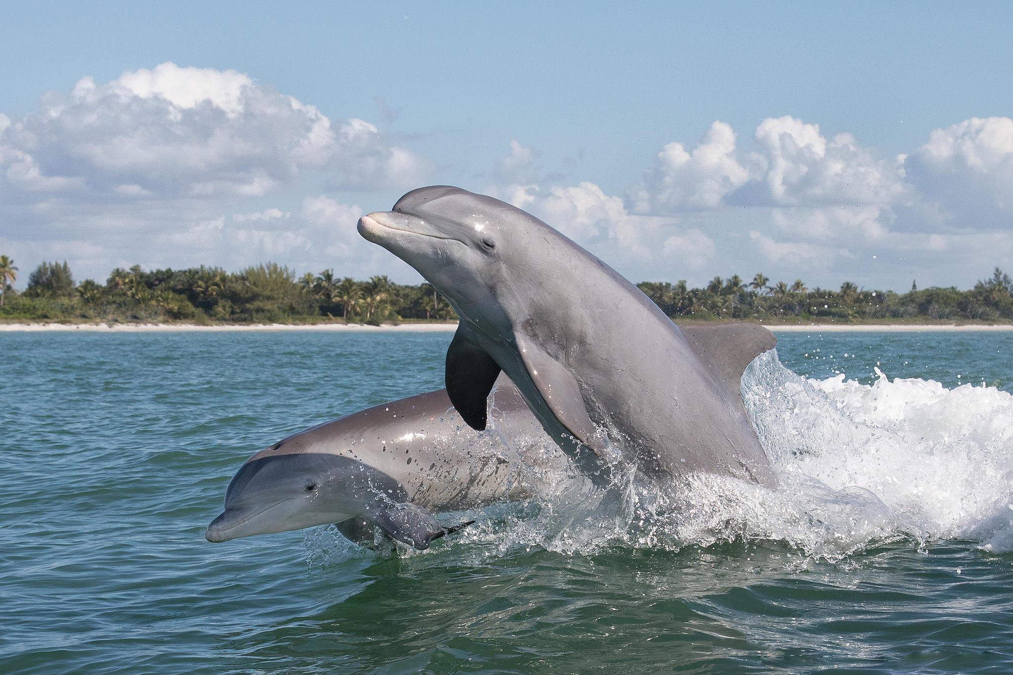 море, волны, дельфины