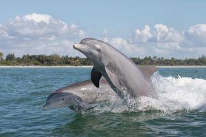 Фото бесплатно море, волны, дельфины